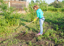 Young woman weeding potato sprouts using hoes. Young beautiful woman in green blouse and blue jeans weeding potato sprouts using hoes outdoor on summer day Royalty Free Stock Images