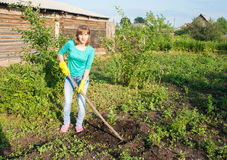 Young woman weeding potato sprouts using hoes. Young beautiful woman in green blouse and blue jeans weeding potato sprouts using hoes outdoor on summer day Stock Photo