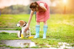 Young woman in wellies walk her dog. Young woman in dress and turquoise wellies walk her beagle dog in a park Royalty Free Stock Photo