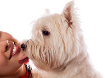 Young woman with West Highland White Terrier. (isolated on white stock images