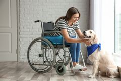 Young woman in wheelchair with dog. Indoors Stock Photography