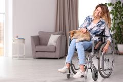 Young woman in wheelchair with puppy royalty free stock photography