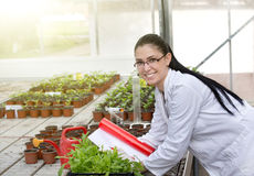 Young woman in white coat researching growth of sprouts in flowe Royalty Free Stock Photos