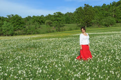 Young woman in a white flowers field. Beautiful happy woman in a white daffodil flowers field Stock Image