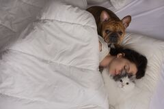 Free Young Woman With Dog And Cat Bask In The Morning In Her Bed Stock Photography - 177841602