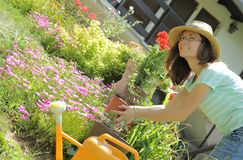 Young woman working with flowers in the garden Royalty Free Stock Photo