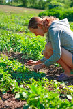 Young woman working in the garden Stock Photo
