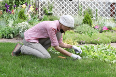 Young woman working in the garden bed Stock Images