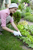 Young woman  working in the garden bed Royalty Free Stock Image