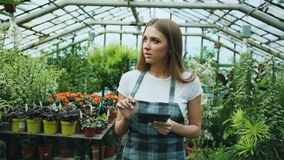 Young woman working in garden center. Attractive girl check and count flowers using tablet computer during work in. Young man working in garden center Stock Photos