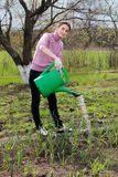 Young woman working in the garden. Stock Images