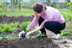 Young woman working in the garden. Royalty Free Stock Images