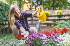 Woman Watering Flower Garden Plants. woman taking care of her pl stock image