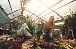 Young woman working in a greenhouse. Female worker planting seedlings in plant nursery Stock Photos