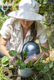 Young woman working her home garden. Stock Images