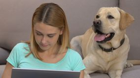 Young woman working on laptop, dog sitting near on sofa pet emotional connection. Stock footage stock footage