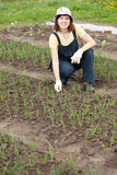Woman  working at  onion plant. Young  woman  working at  onion plant in spring Stock Images