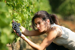 Young woman working in a vineyard royalty free stock photos