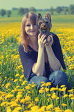 Young woman and Yorkshire terrier in dandelion meadow Royalty Free Stock Image
