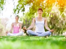 Young women exercising in the park. Healthy and fit young women doing yoga in the park Stock Images