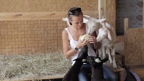 Young women feeding sheeps and goat from hand