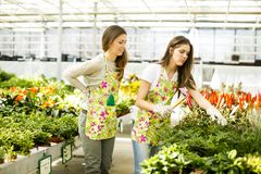 Young women in flower garden Royalty Free Stock Image