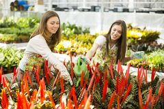 Young women in flower garden Royalty Free Stock Photos