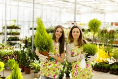 Young women in flower garden Stock Images