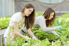Young women in garden Royalty Free Stock Photography