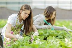 Young women in garden Royalty Free Stock Photos