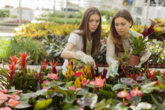 Young women in garden Stock Image