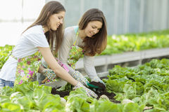 Young women in garden Royalty Free Stock Photo