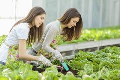 Young women in garden Stock Photos