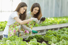 Young women in garden Royalty Free Stock Image