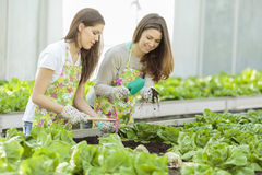 Young women in garden Stock Photo
