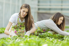 Young women in garden Stock Photography