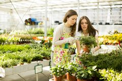 Young women in the garden Stock Photography