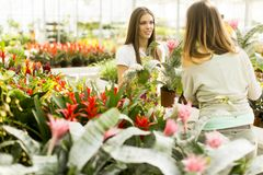 Young women in the garden Royalty Free Stock Images