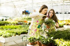 Young women in the garden Royalty Free Stock Image