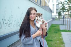 Young women holds her best friend little pet puppy of husky in her arms. love for dogs royalty free stock photography