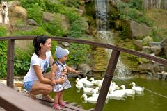 A young woman with a little daughter on the bridge in the Park watching the swans floating stock photo