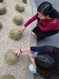 young women playing the spines of a cactus plant royalty free stock photography