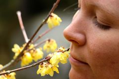 Young women smelling the first of the spring blossom in  Tokyo Japan Stock Photos