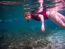 Young women snorkeling in the tropical water. Roatan, Honduras. A young women snorkeling in the tropical water Stock Image