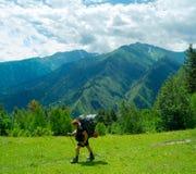Young women trekking in Svaneti,. Male hiker trekking in Svaneti, Georgia Stock Images