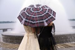 Young women under the umbrella. Stock Images