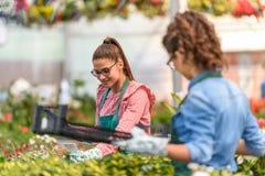 Young women working in beautiful garden center royalty free stock photos