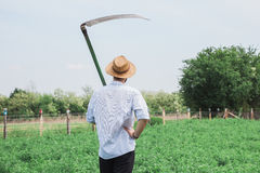 Young worker in the field. Worker with a reaper in the field Royalty Free Stock Photo