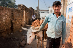Young worker leads a donkey loaded with bricks Stock Images