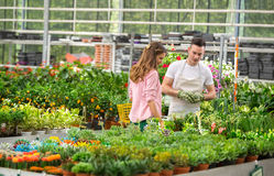 Young worker offers flowers in greenhouse Stock Image